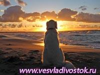 Специализированный пляж для собак открылся в Италии