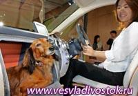 Машина с местом для собаки от Honda