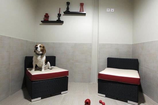Во Франции открылся отель для собак класса люкс